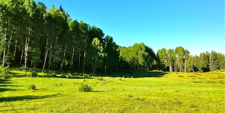 1500 Acres  Aspen groves