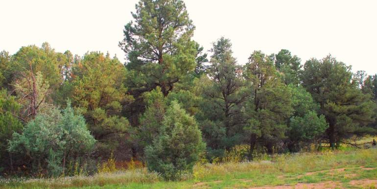 Trees near entrance