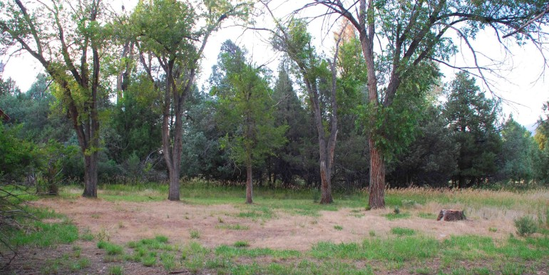 Trees towards creek behind house